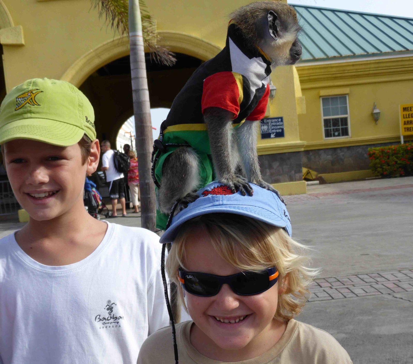 rencontre avec des singes