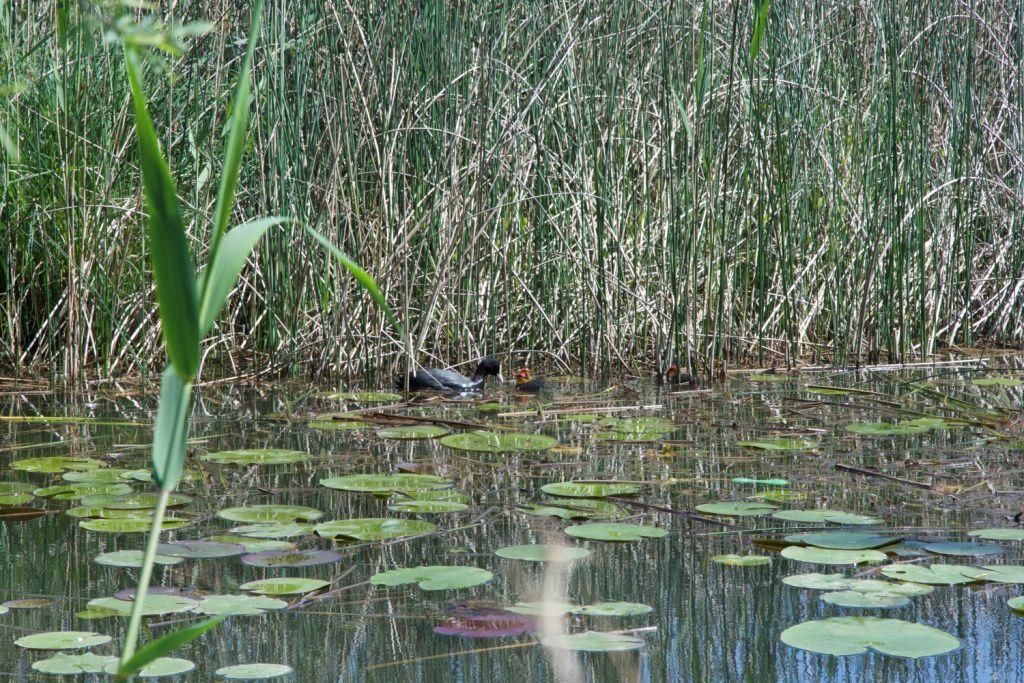Les étangs de Crosagny à St Félix