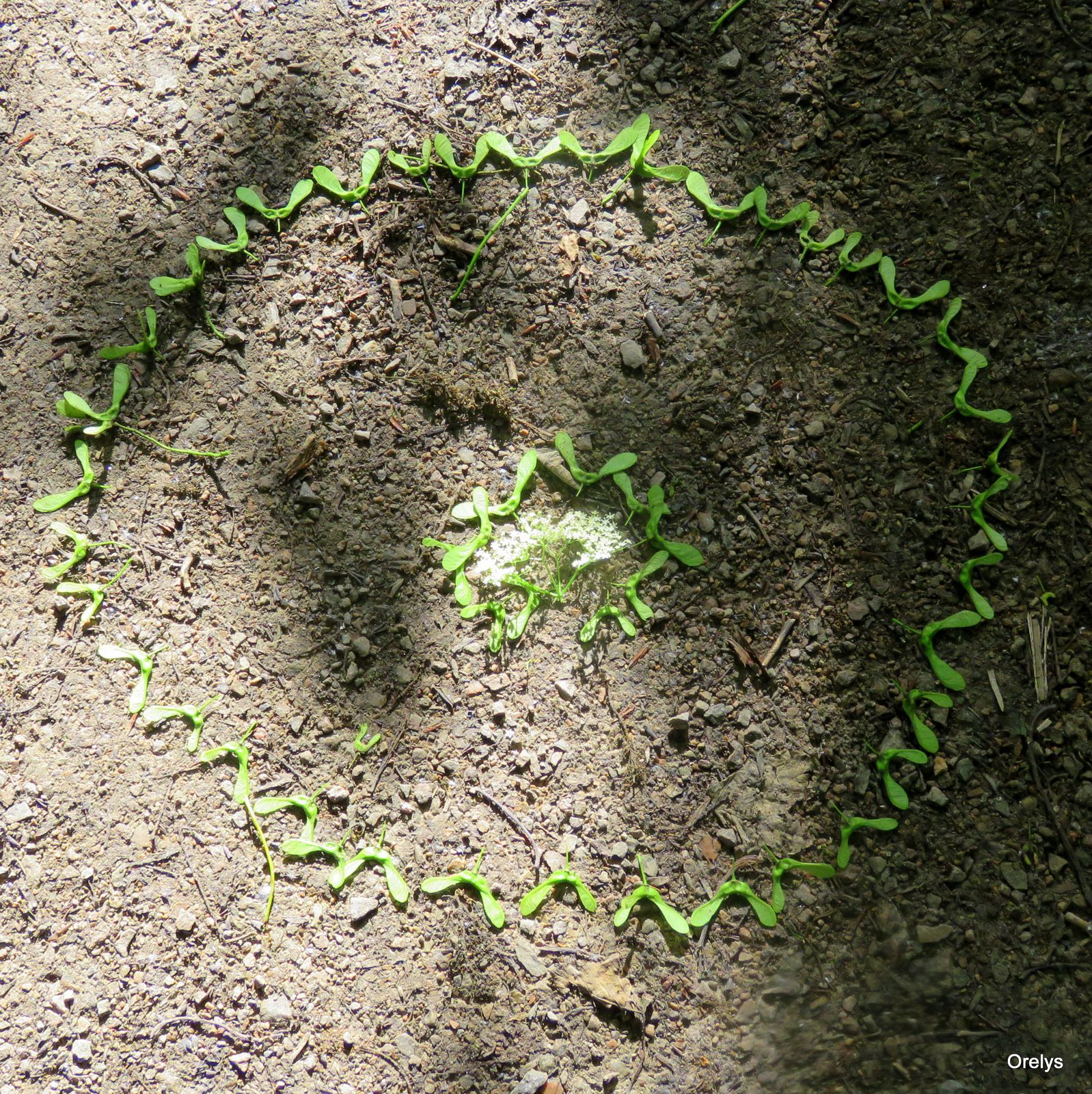 Mandala nature, sur le chemin de la maison zome de Claire...