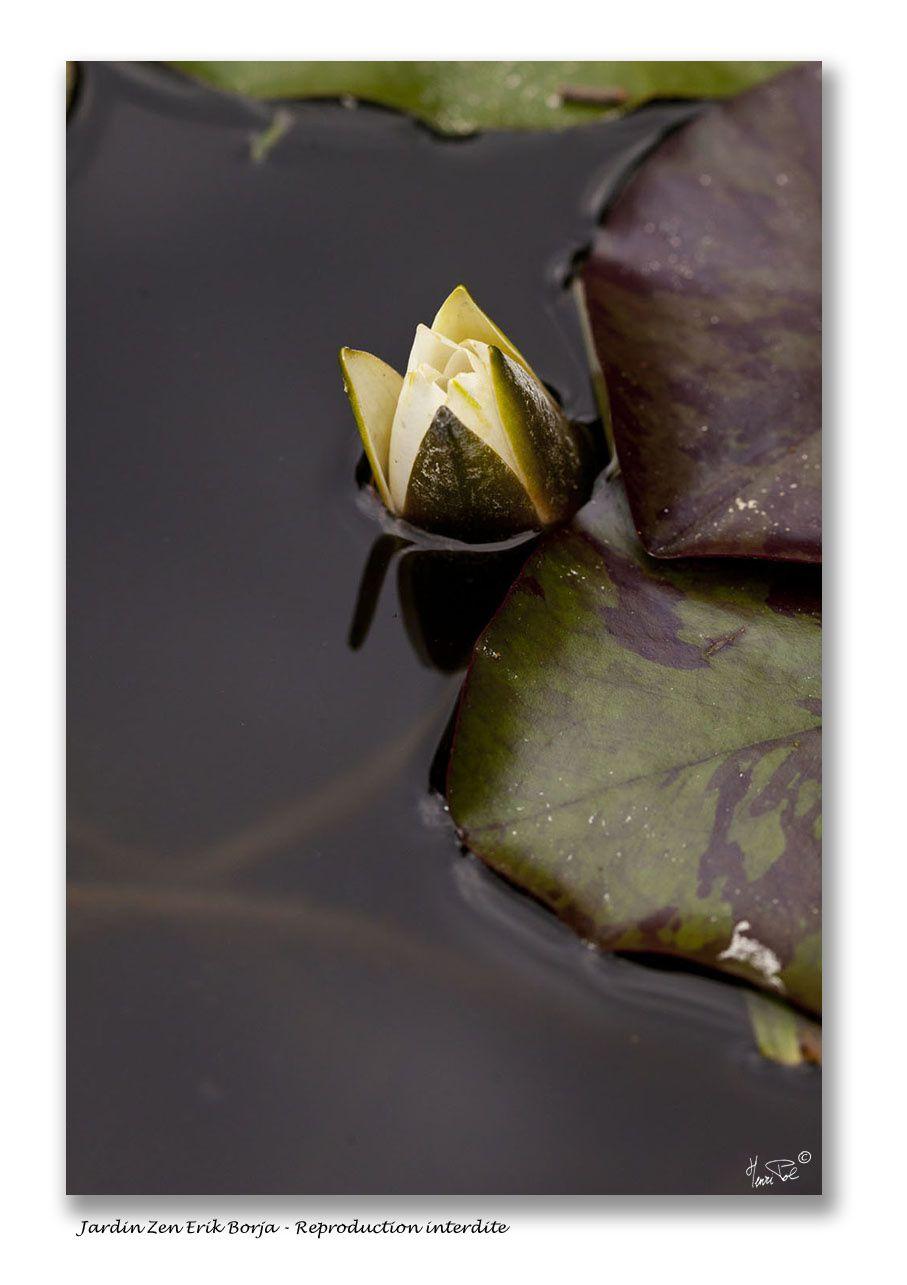 Album: Au jardin Zen d'Erik Borja