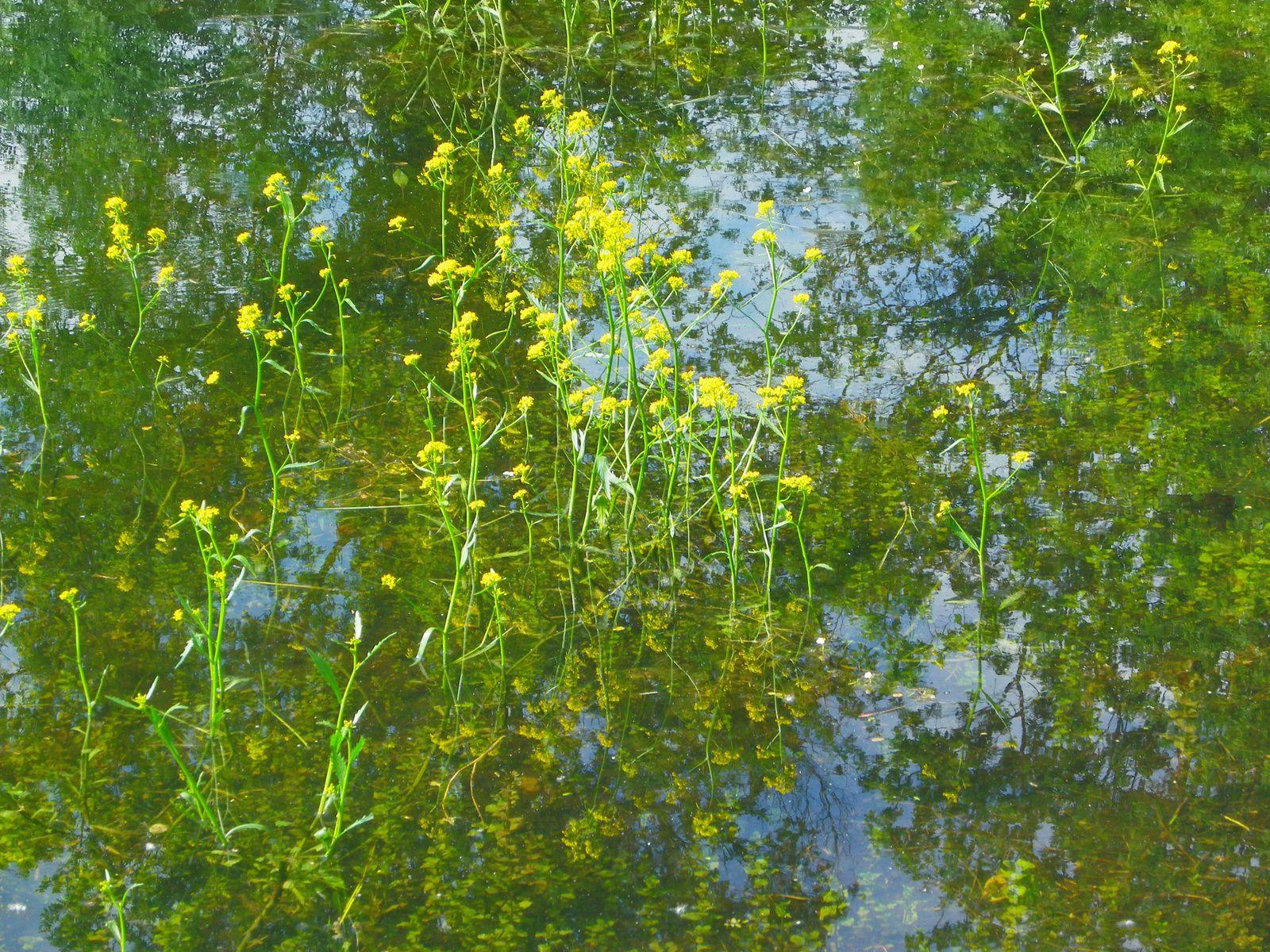 Cresson amphibie