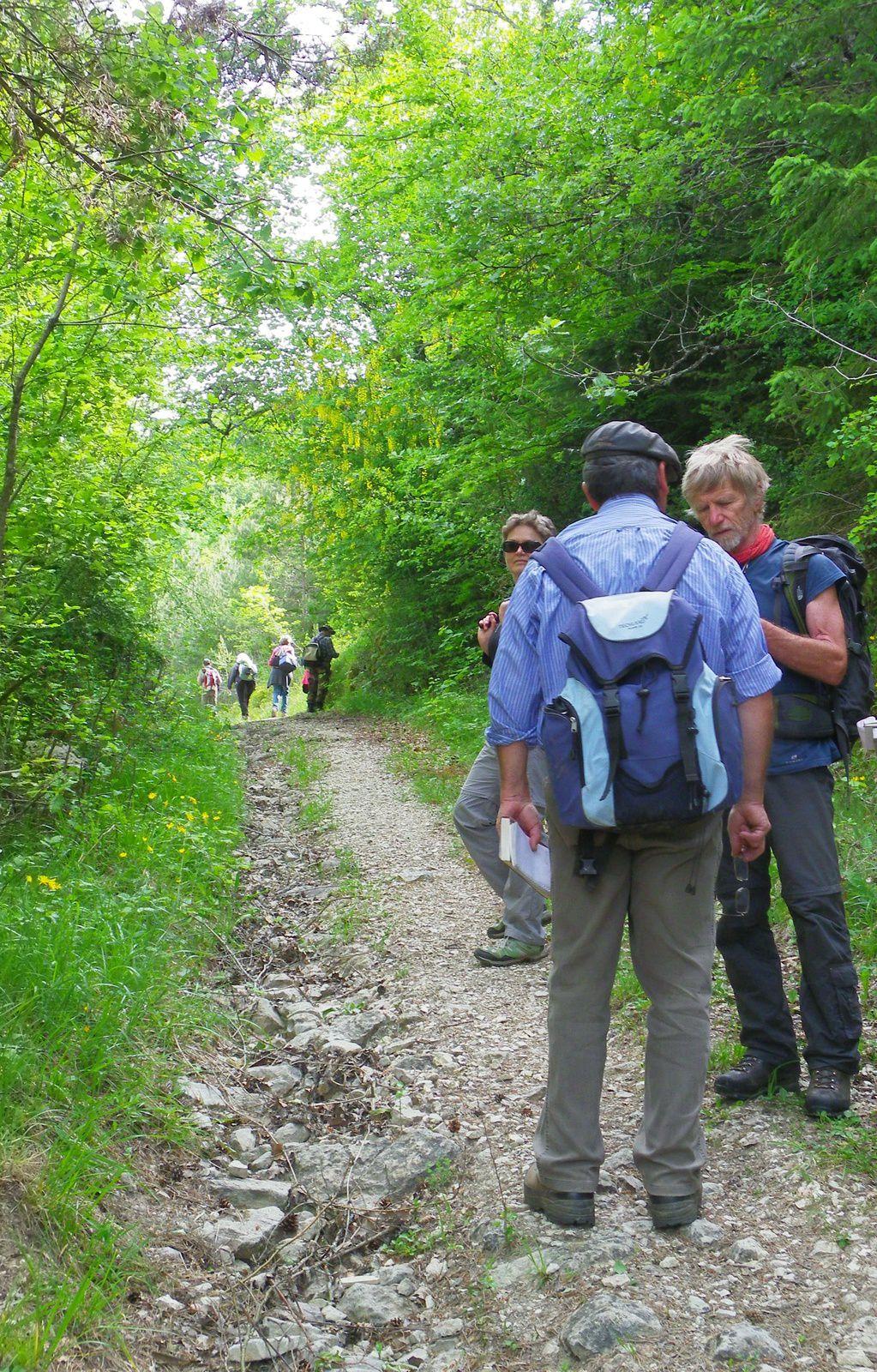 sortie botanique: Plateau de Jargoy - Col d'Evosges