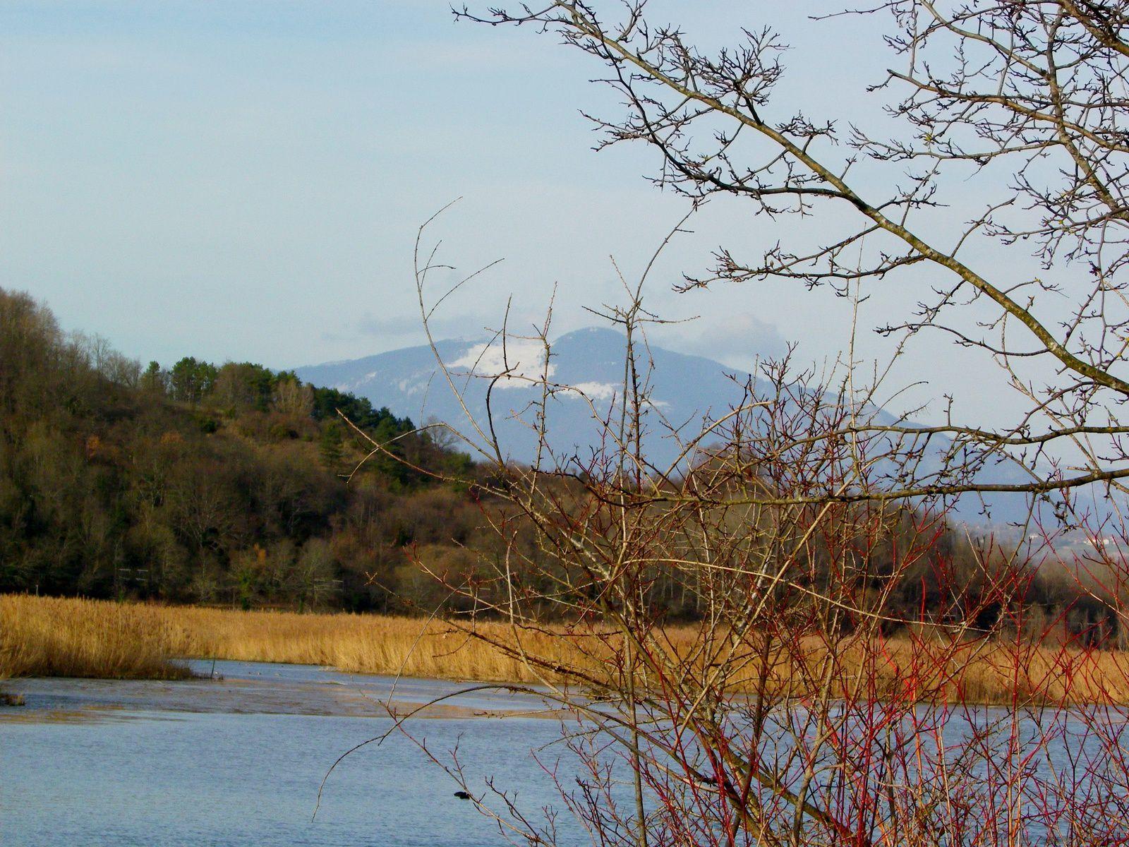 roselière, bourbier, au loin: le Grand Crêt d'Eau