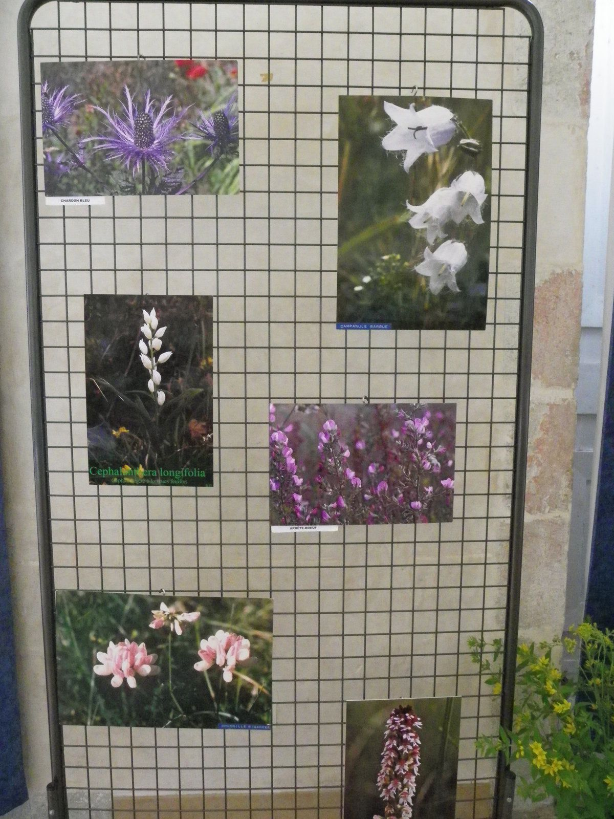 Exposition botanique 2016