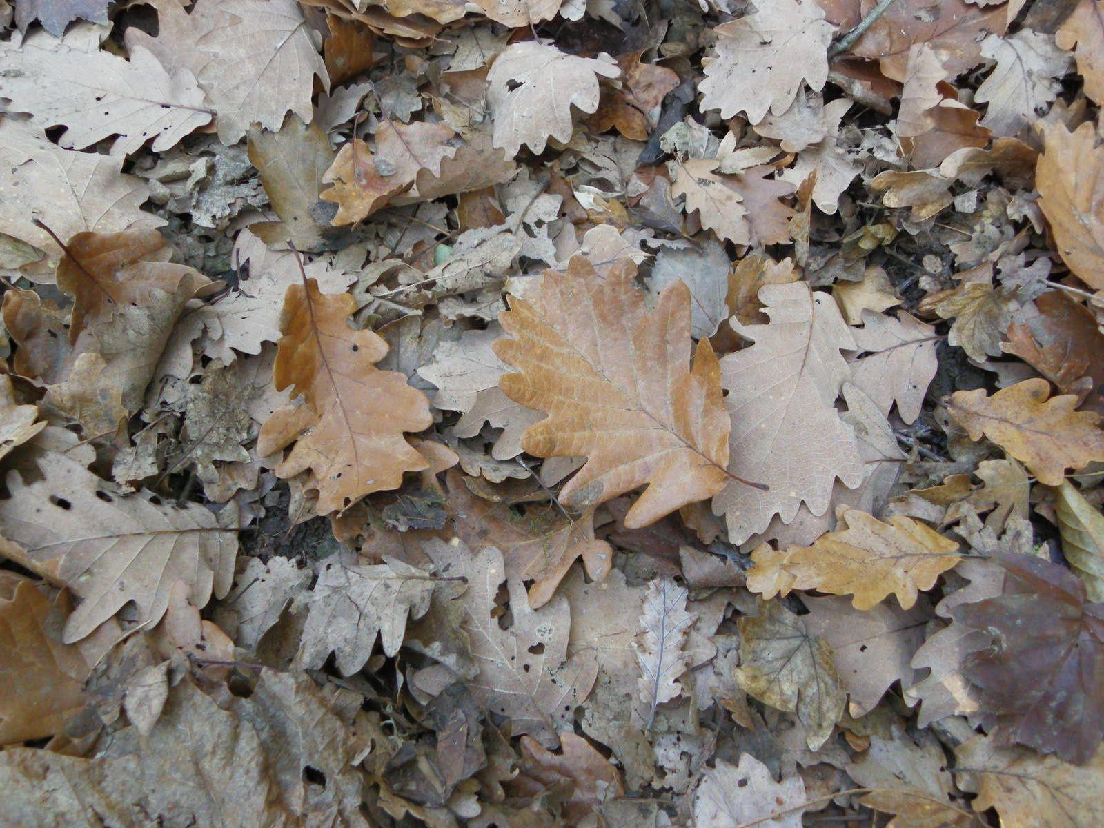 feuilles d'automne (2)