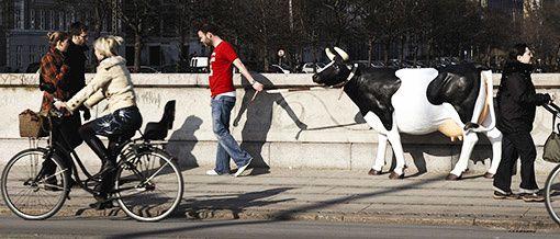vache en balade