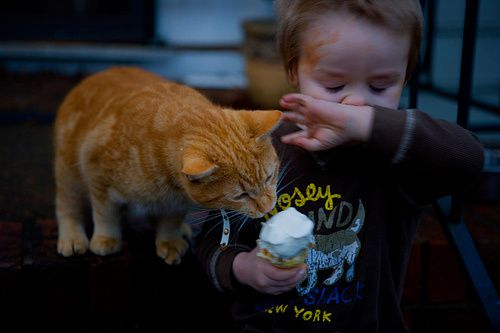 chat-glace-enfant
