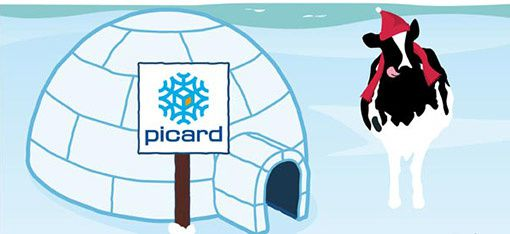 Igloo Picard et vache