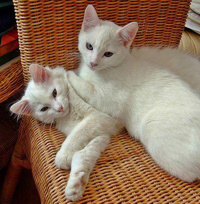 chats-blanc-ben-jerry.jpg