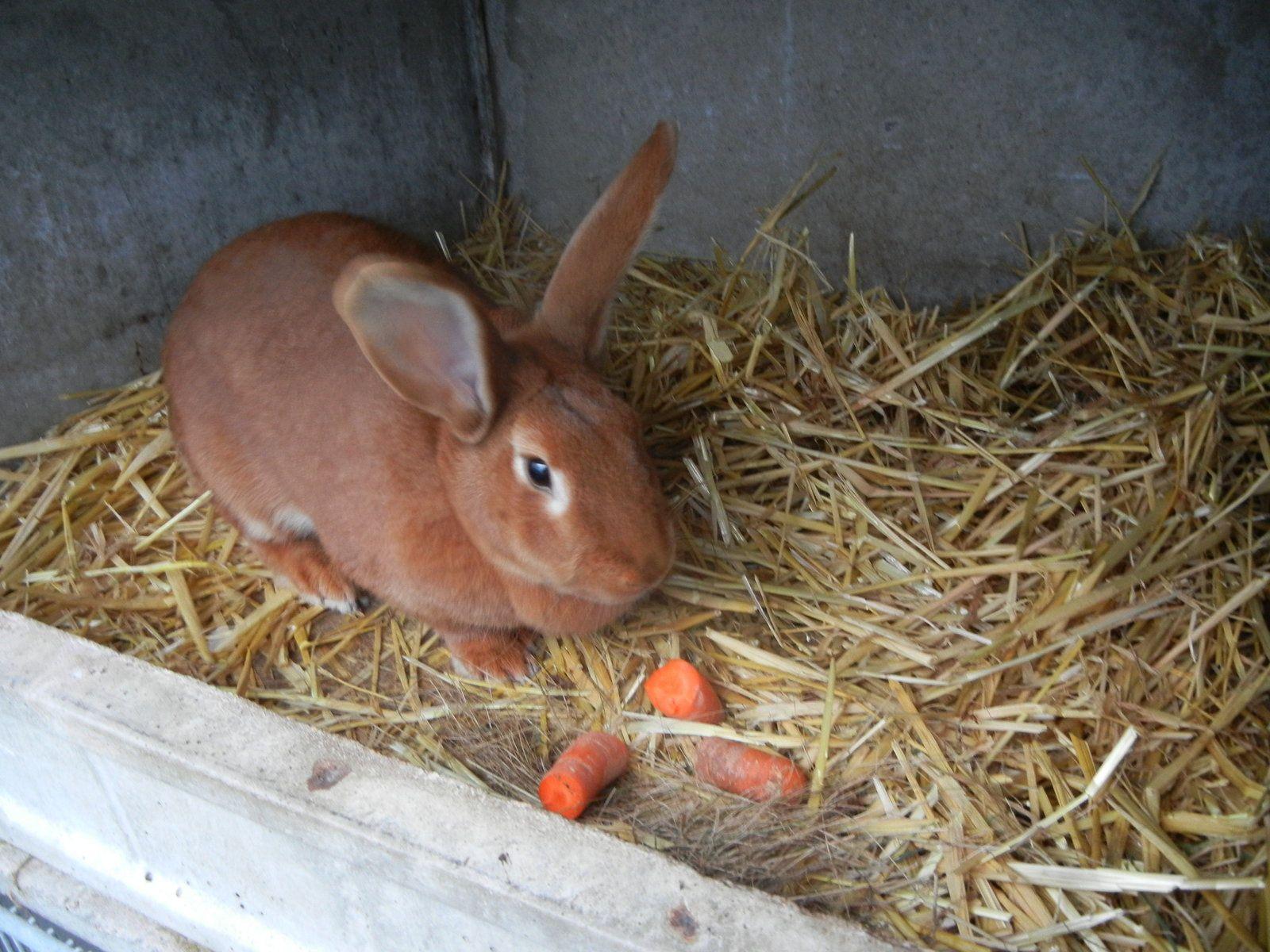 Hello Mister Rabbit