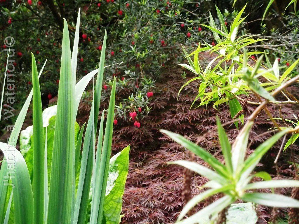 Les Jardins de Kilmokea