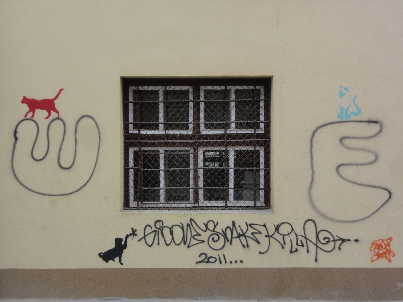 Les chats de Cluj