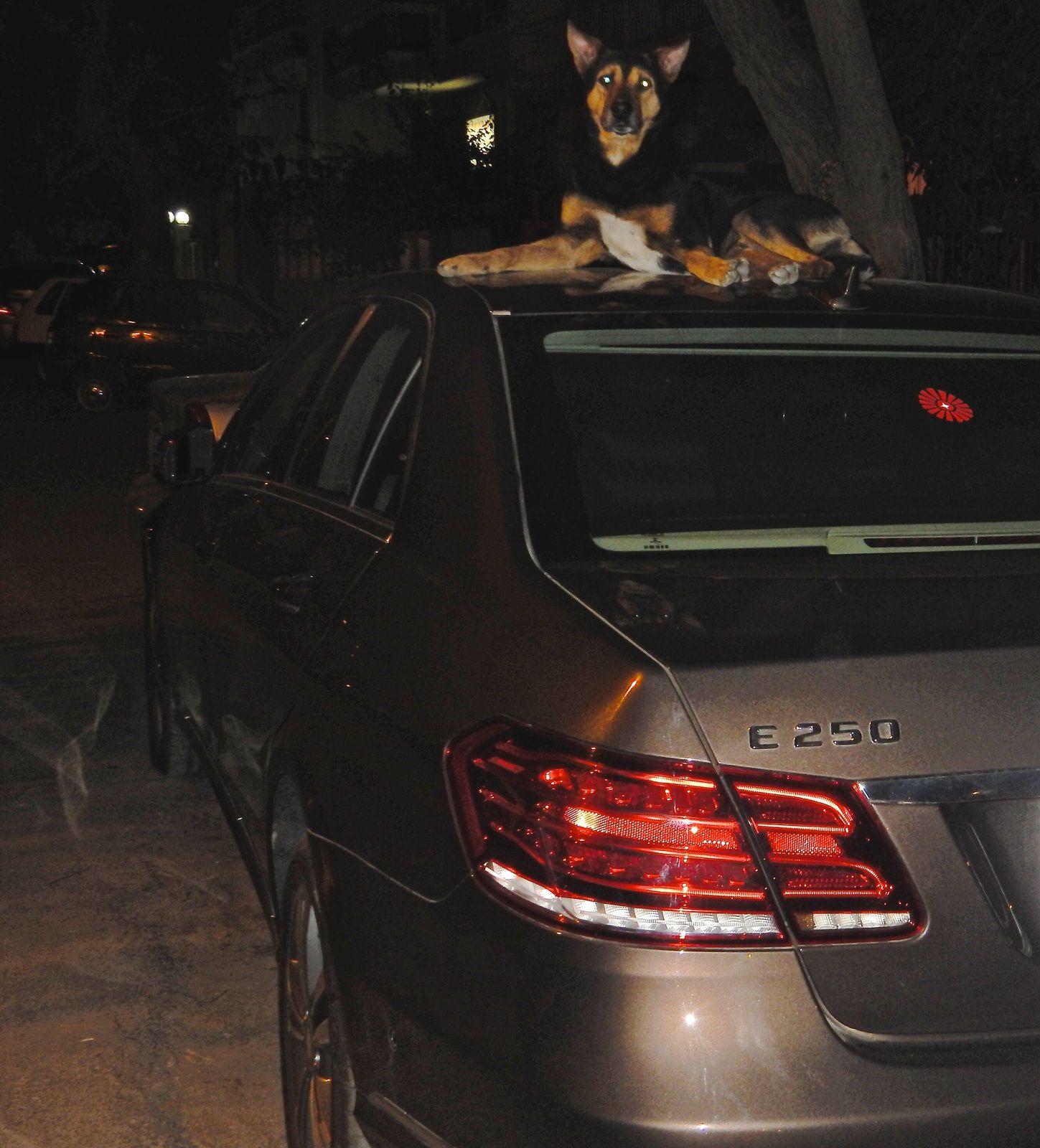 Une vie de chien, Delhi - Avril 2014