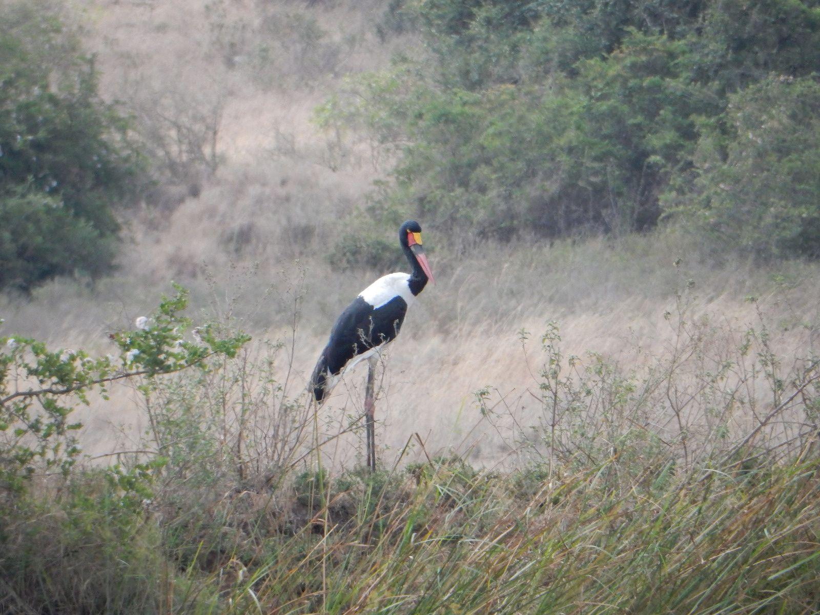 Nairobi National Park, part I - Kenya, Mars 2015