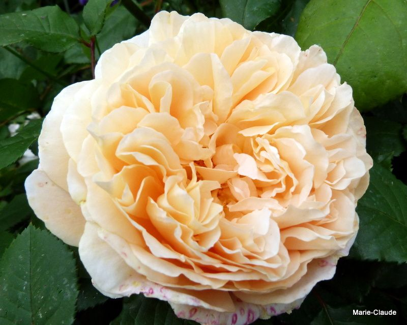 9) A bien la tête d'une princesse !!! Crown Princess Margareta