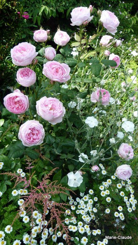 Une scène du jardin toute pastellisée