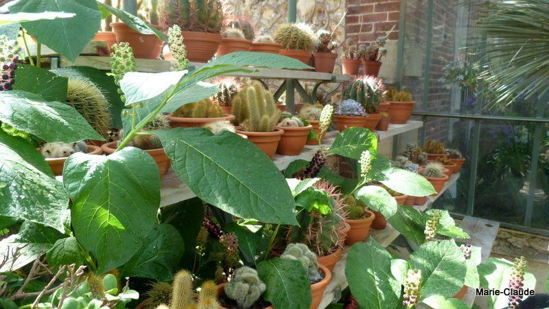 Une superbe serre adossée à la maison, des cactées y vivent bien au chaud !