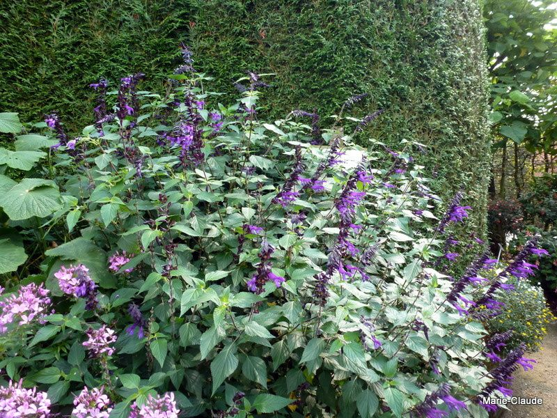 Au paradis du Fuchsia,