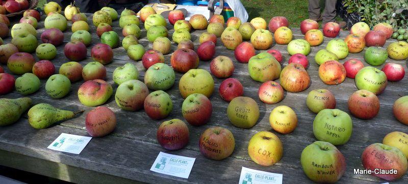 De très nombreuses variétés de pommes, des coings pour réaliser de bonnes gelées et des jus de fruits plein de vitamines ( le vin chaud était juste à côté ...),