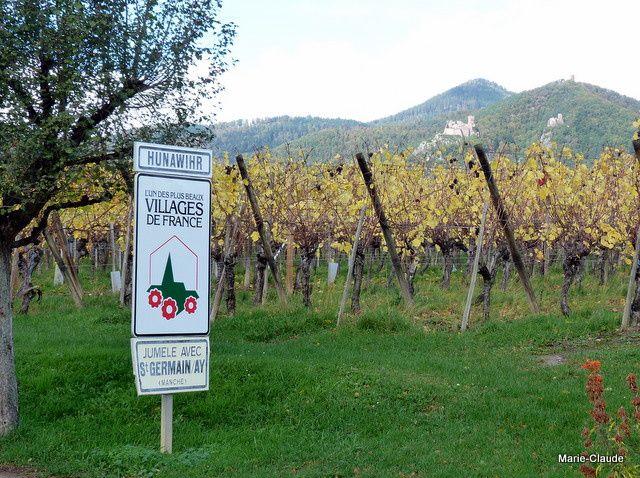 De jolies maisons alsaciennes, des vignes qui produisent ce vin blanc réputé qui va sans doute se trouver sur vos tables pour le réveillon et une serre aux papillons !