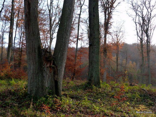 Couleurs d'automne en forêt de Compiègne,