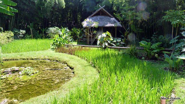 Une reproduction de la rizière avec au fond l'abri nécessaire pour s'abriter et ranger ses outils, les rizières étant souvent situées à plusieurs kilomètres des villages,
