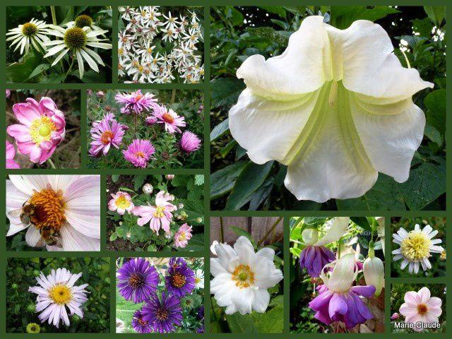 Anémones, Asters, Dahlias et cloches parfumées du Brugmansia se donnent rendez-vous en ce neuvième mois