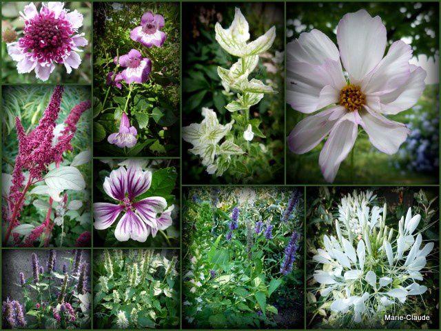 C'est l'épanouissement des fleurs du SOL 2013,