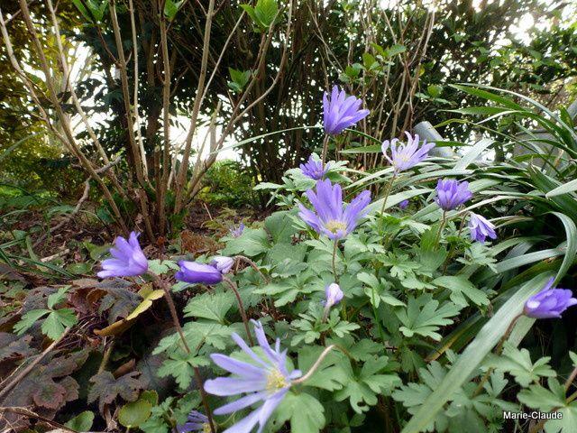 Cannelle au jardin,
