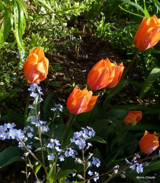 De quoi cacher les oeufs ou le festival de la tulipe ...