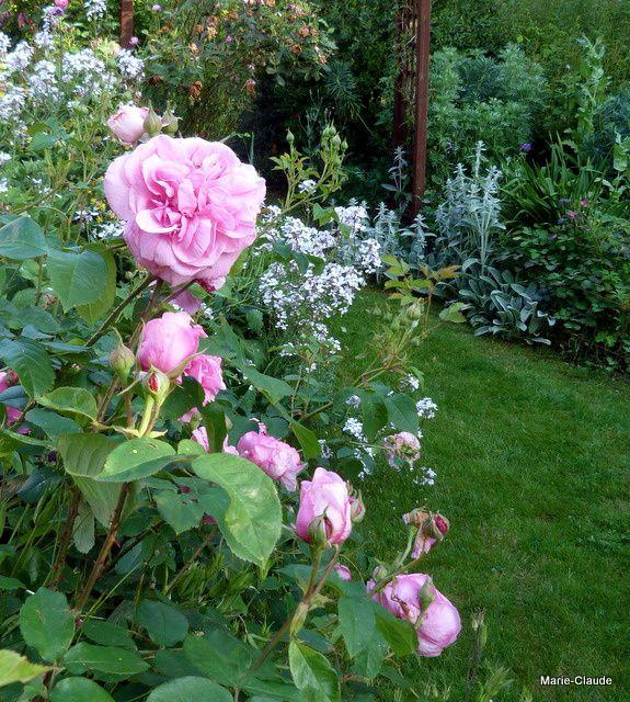 Petit tour du jardin  au 1er juin,