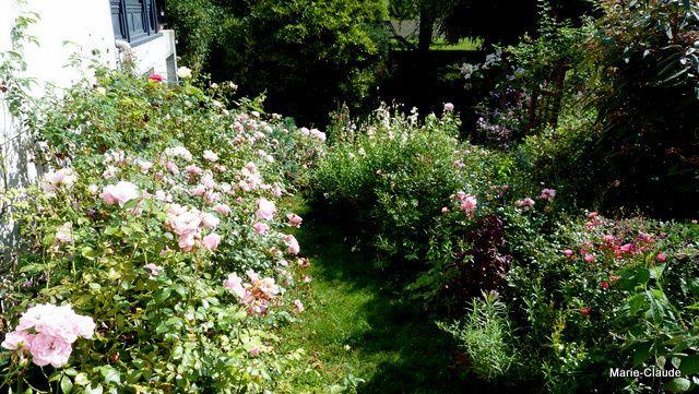 """Le pignon sud tout ensoleillé est le domaine des roses, la descente chemine entre rosiers roses, à gauche les """" Bonica"""", à droite les Fairy, en bas les fuchsias, les Penstemons et les Gauras blancs"""