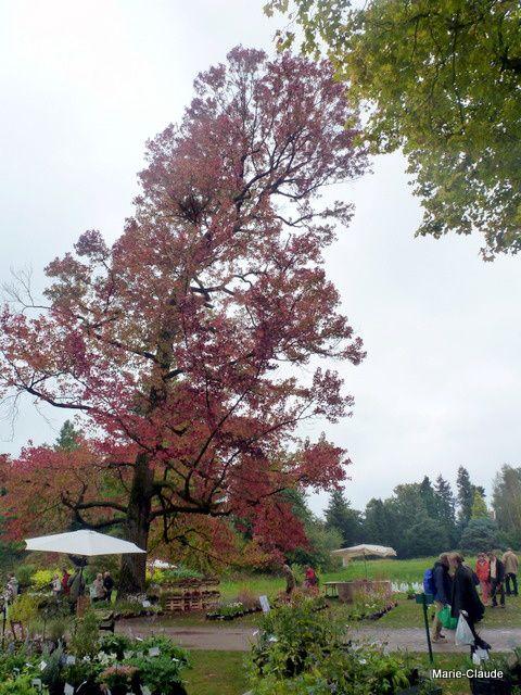 Comme cet arbre qui me fait penser à la tour de Pise...