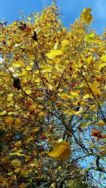 Couleurs d'automne à Blérancourt et... découverte,