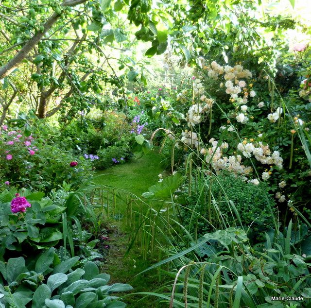 L'allée du fond du jardin, barrée par les inflorescences de la laîche pendante et éclairée par le rosier grimpant 'Ghislaine De Féligonde