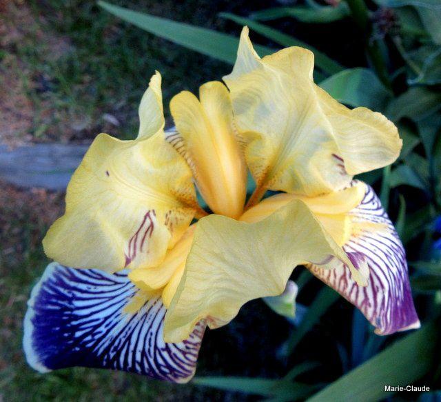Iris un jour, Iris toujours,