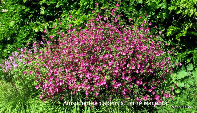 Voyage en Normandie : Samares gardens à Jersey,