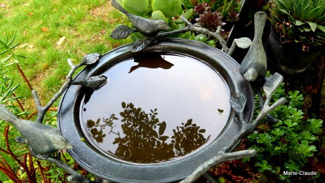 Bain d'eau avec reflet de noyer,