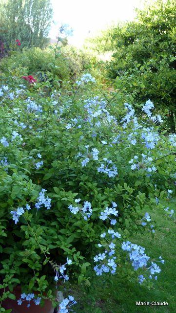 La floraison des géantes,