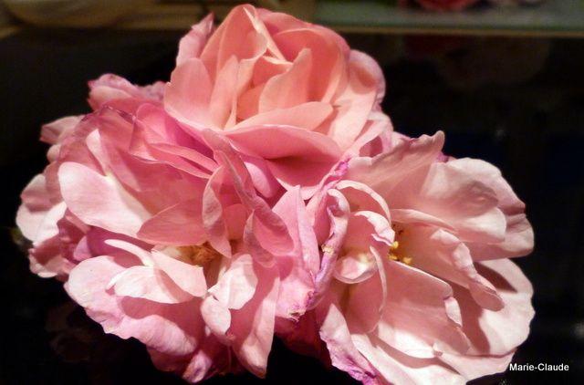 Bouquet du 12 novembre,