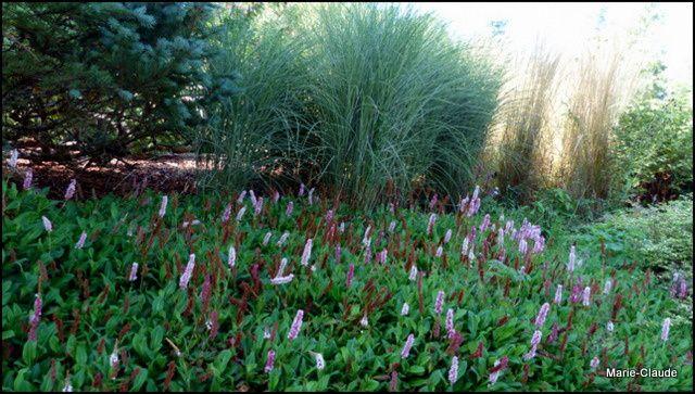 Visite de jardin : le jardin de Callunes,