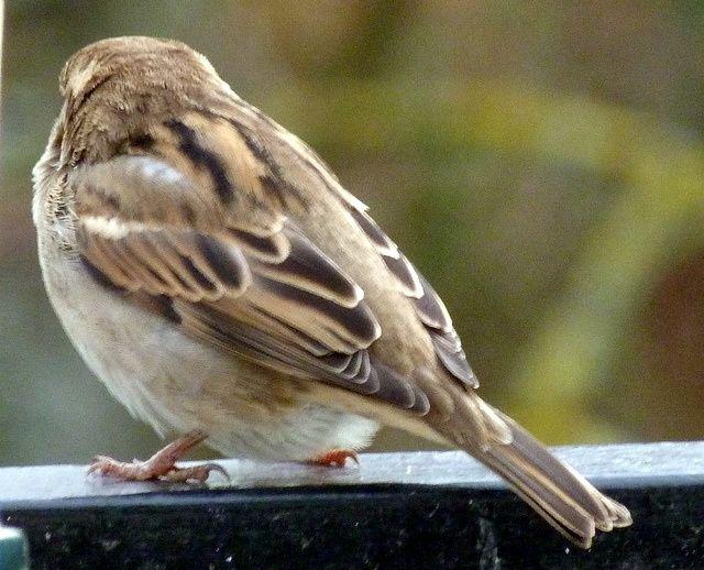 L'hiver des oiseaux,