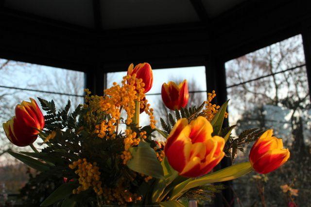 Des fleurs en hiver,