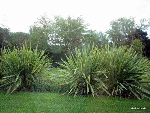 Des plantes exotiques à foison,