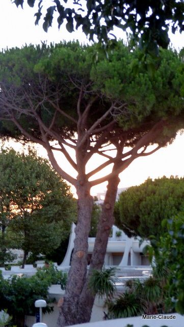 coucher de soleil sur notre location,