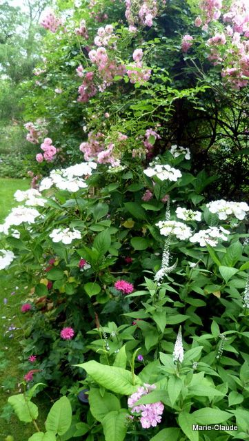 Des roses pour juillet,