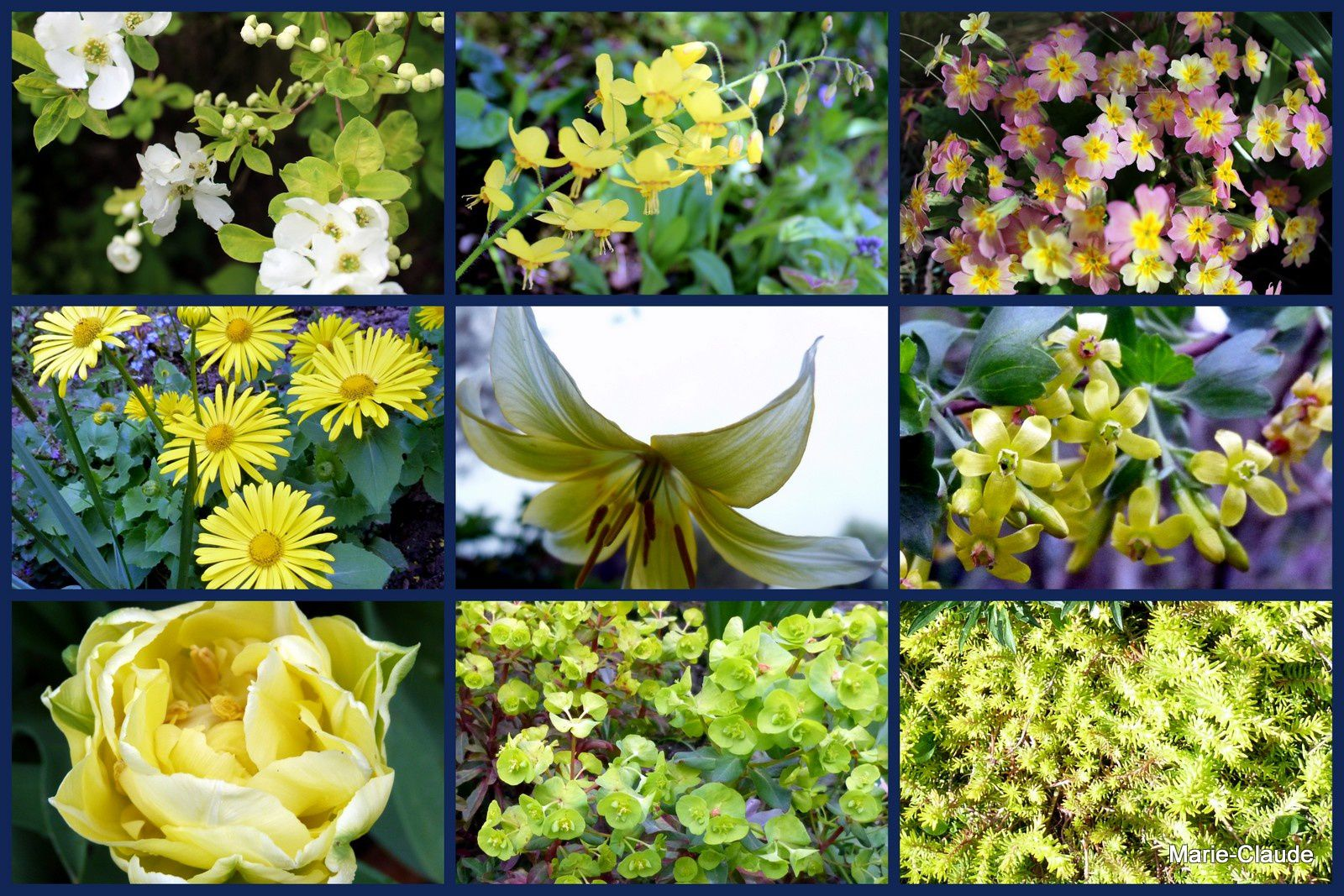 A dominante jaune, avril étant  bien sûr le mois du jaune...