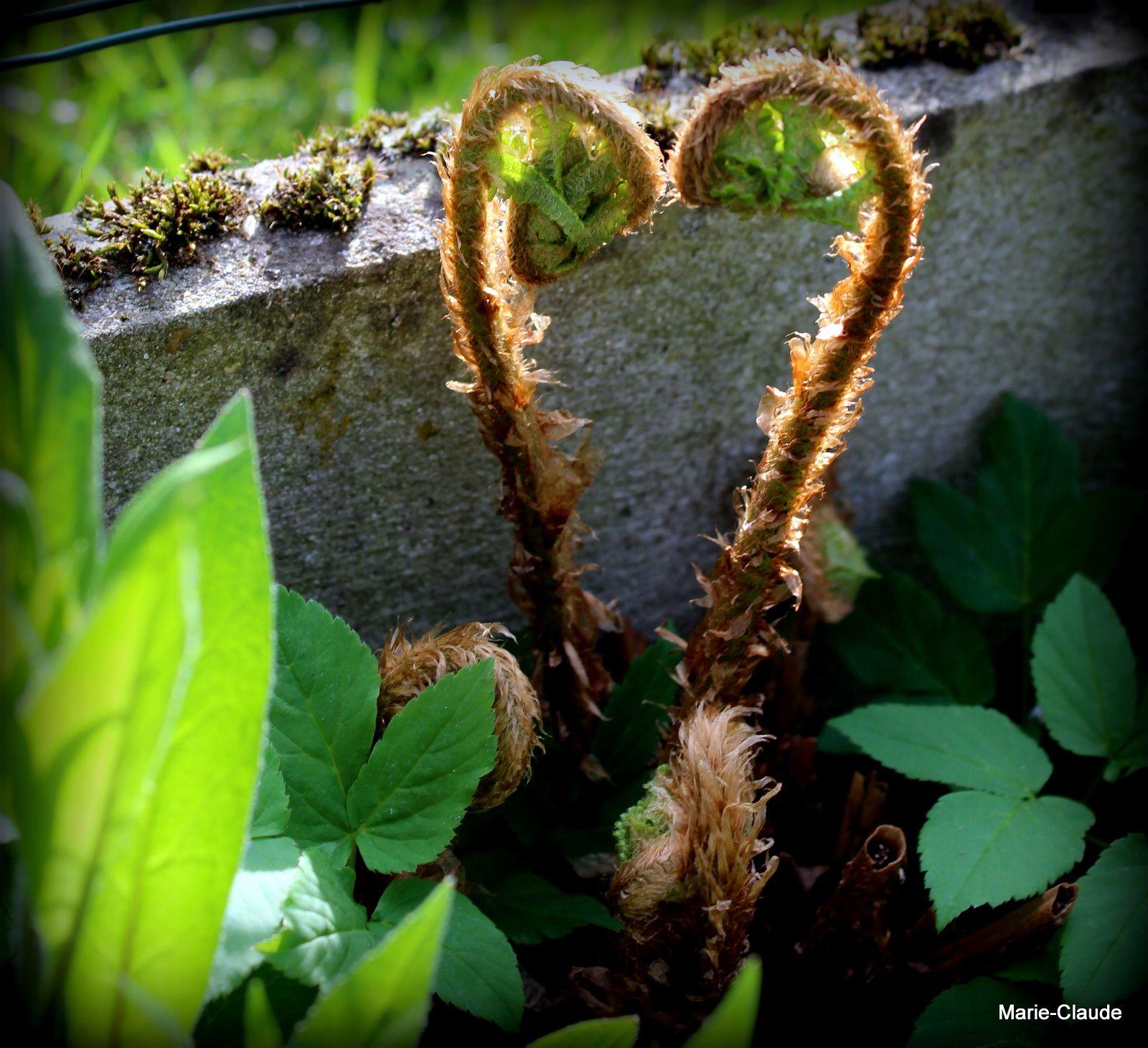 Un coeur de nature,