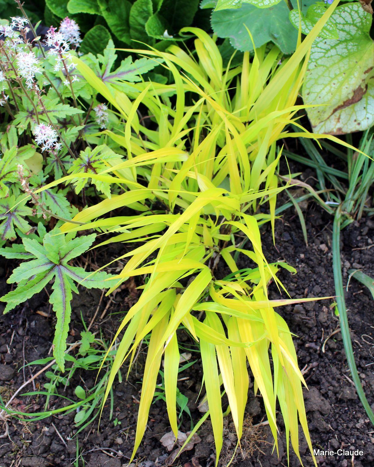 Des plantes pour éclairer l'ombre (2)