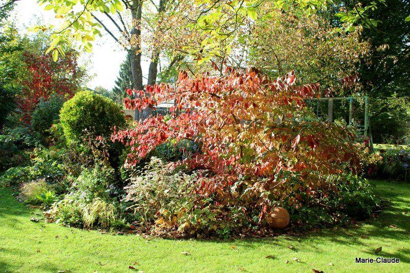 En automne, le rouge est de mise,